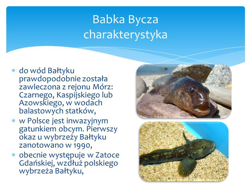  do wód Bałtyku prawdopodobnie została zawleczona z rejonu Mórz: Czarnego, Kaspijskiego lub Azowskiego, w wodach balastowych statków,  w Polsce jest