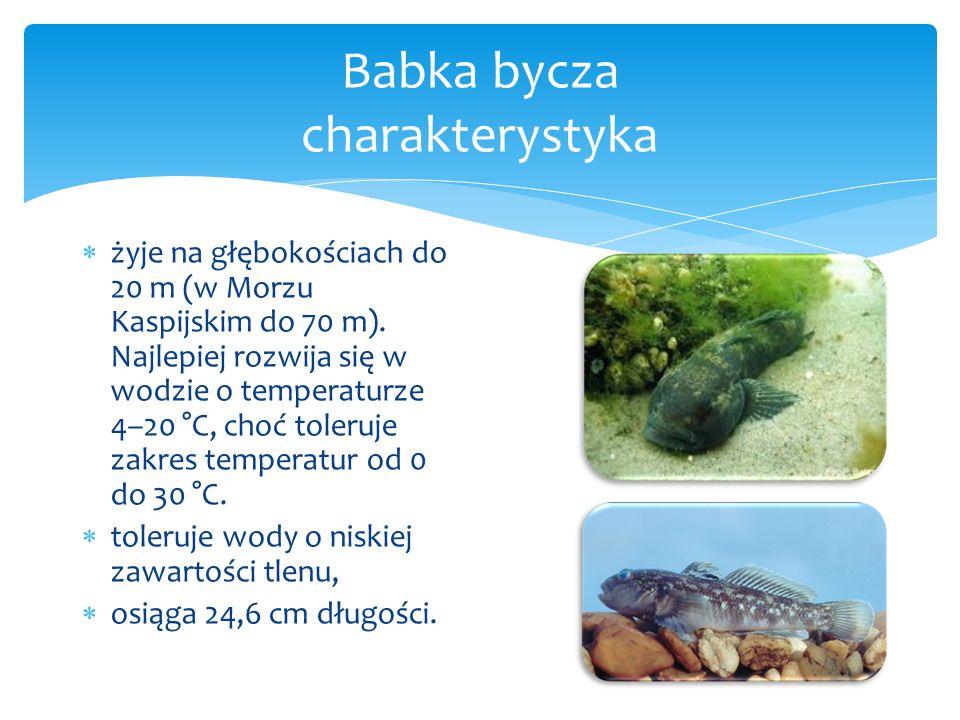  żyje na głębokościach do 20 m (w Morzu Kaspijskim do 70 m).
