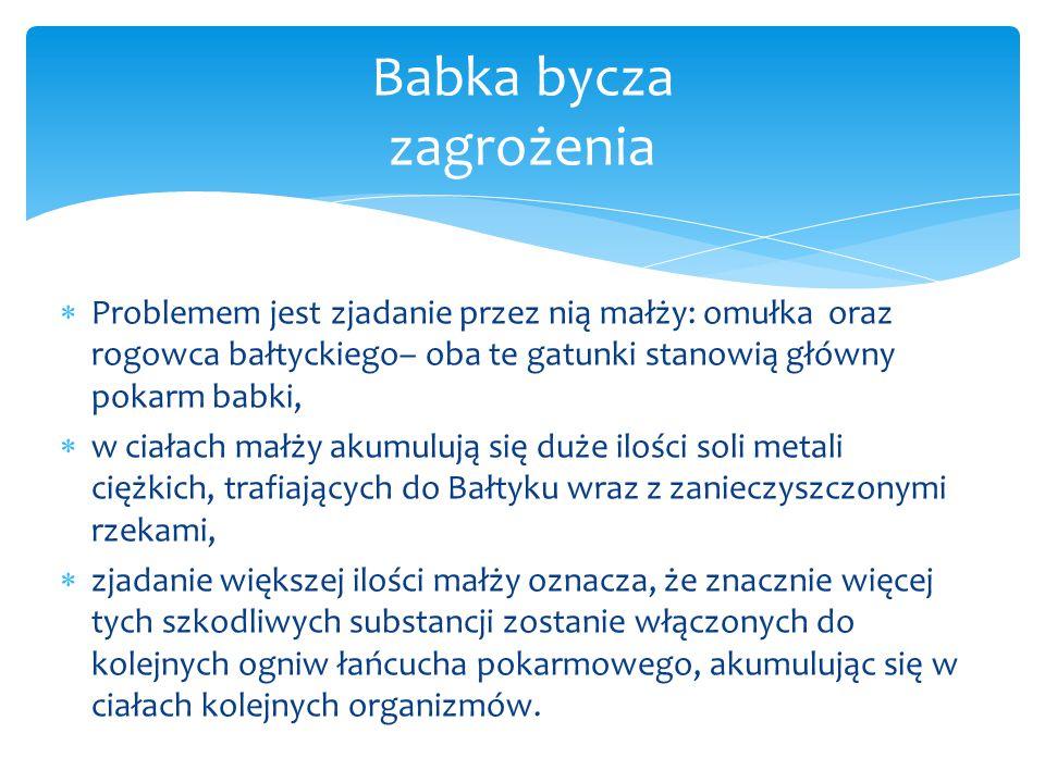  Problemem jest zjadanie przez nią małży: omułka oraz rogowca bałtyckiego– oba te gatunki stanowią główny pokarm babki,  w ciałach małży akumulują s