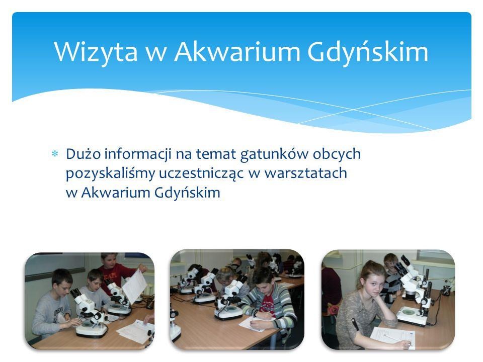  Dużo informacji na temat gatunków obcych pozyskaliśmy uczestnicząc w warsztatach w Akwarium Gdyńskim Wizyta w Akwarium Gdyńskim