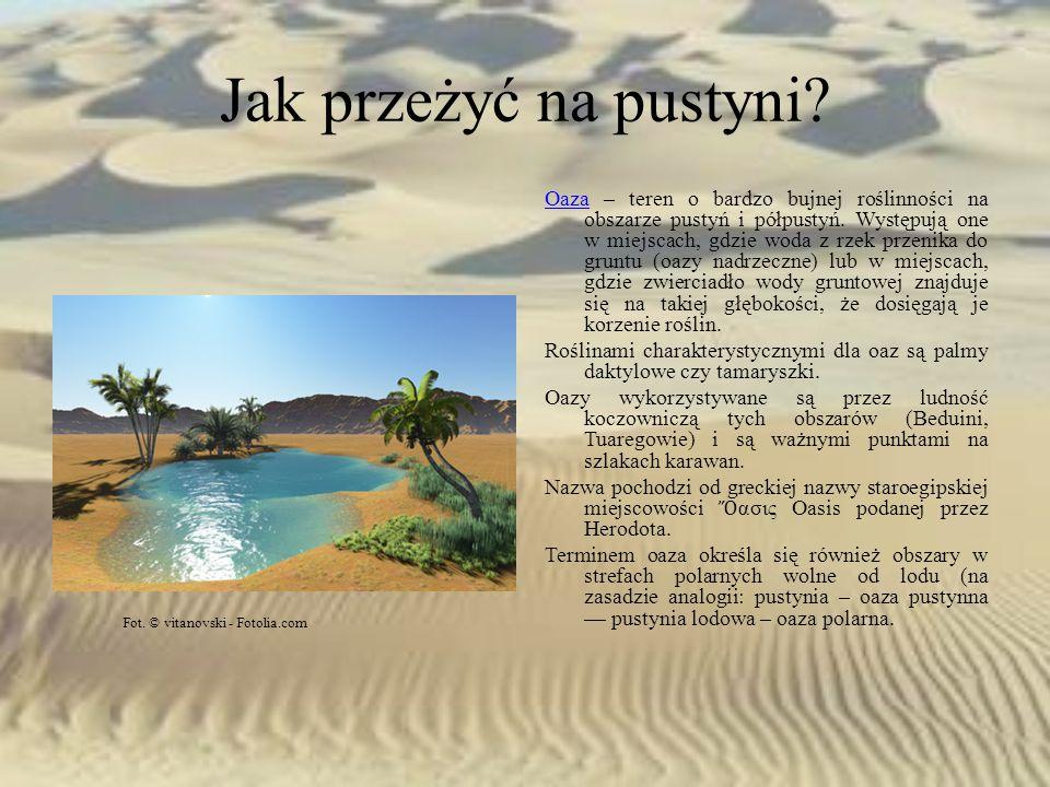 Jak przeżyć na pustyni? OazaOaza – teren o bardzo bujnej roślinności na obszarze pustyń i półpustyń. Występują one w miejscach, gdzie woda z rzek prze