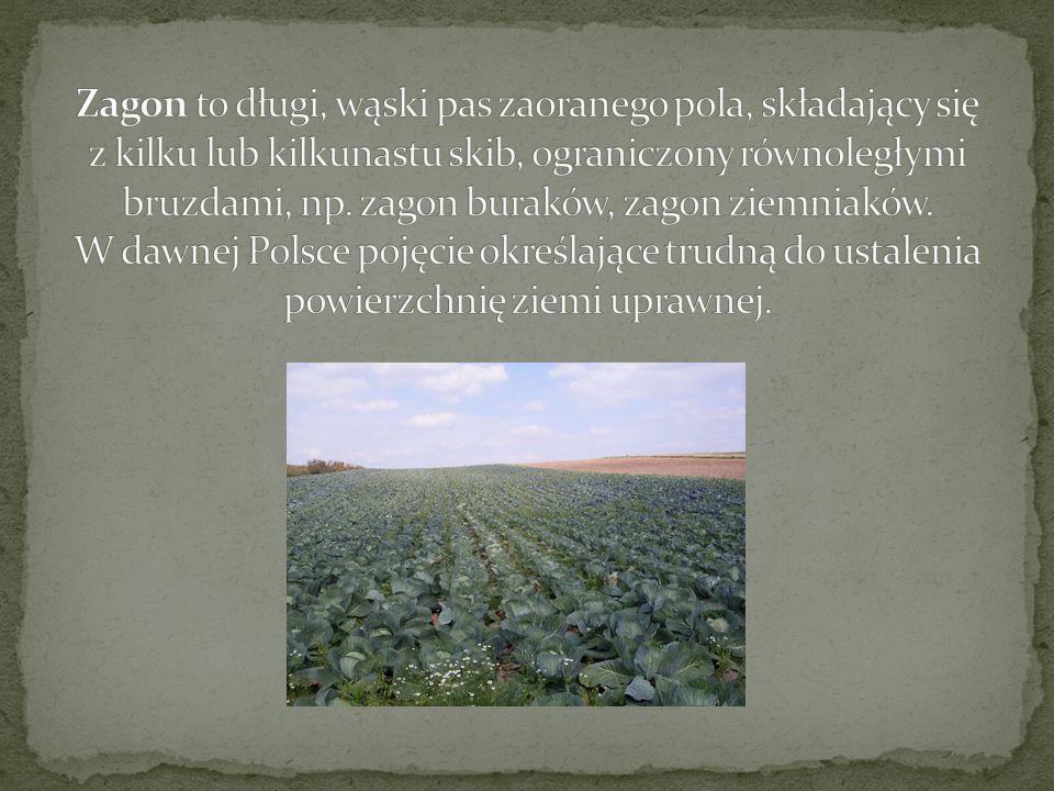 Morga (także mórg, jutrzyna) jest historyczną jednostką powierzchni używaną w rolnictwie.