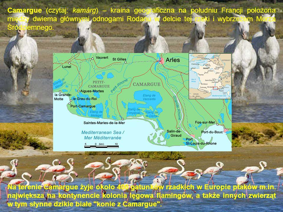 Camargue (czytaj: kamárg) – kraina geograficzna na południu Francji położona między dwiema głównymi odnogami Rodanu w delcie tej rzeki i wybrzeżem Mor