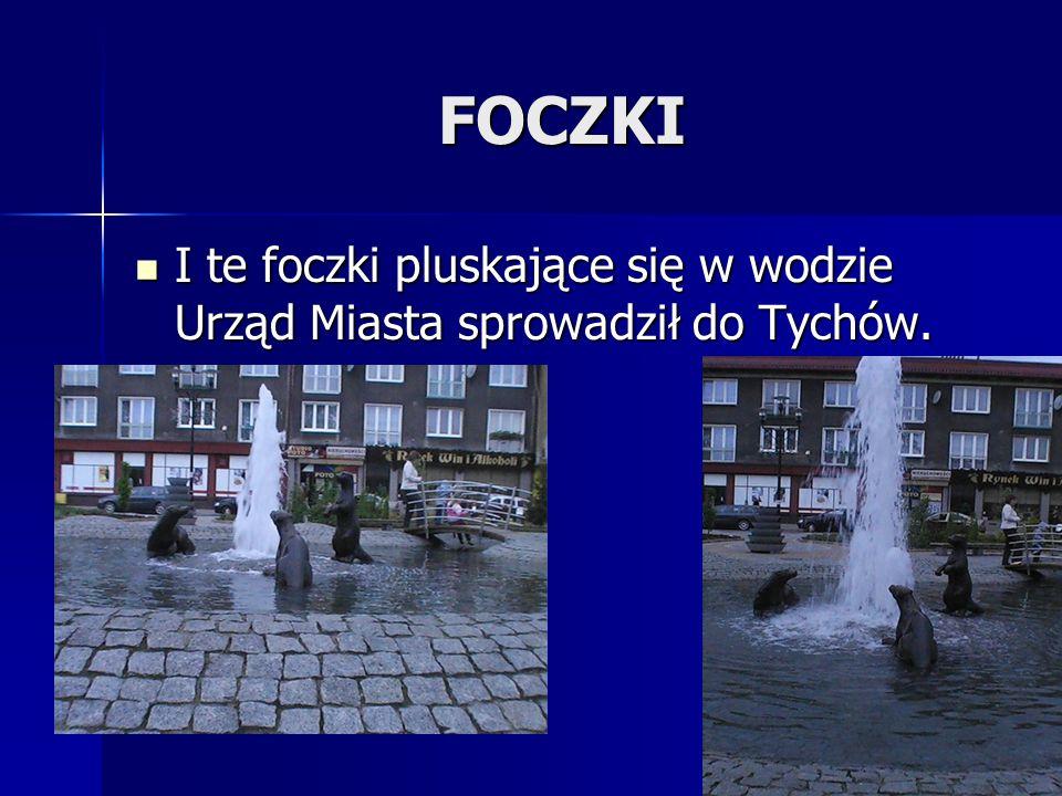 FOCZKI I te foczki pluskające się w wodzie Urząd Miasta sprowadził do Tychów.