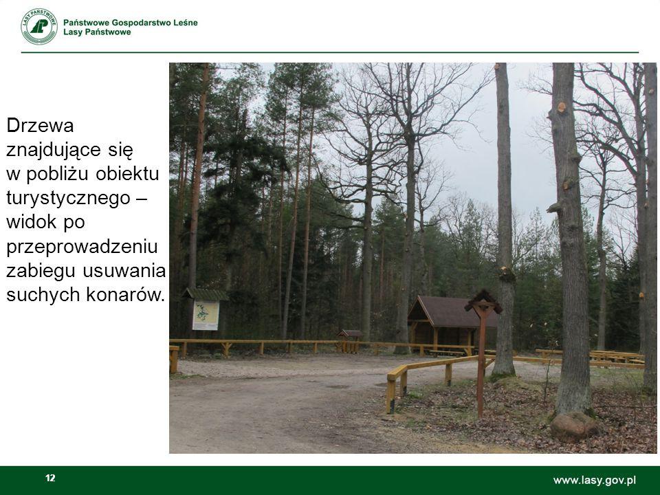 12 Drzewa znajdujące się w pobliżu obiektu turystycznego – widok po przeprowadzeniu zabiegu usuwania suchych konarów.
