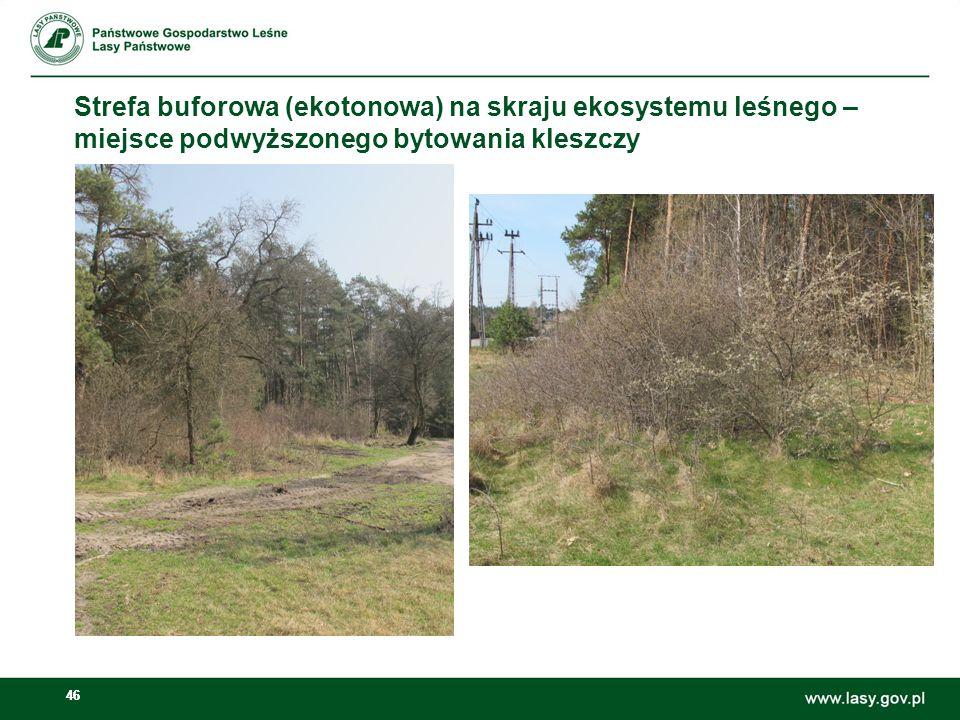 46 Strefa buforowa (ekotonowa) na skraju ekosystemu leśnego – miejsce podwyższonego bytowania kleszczy