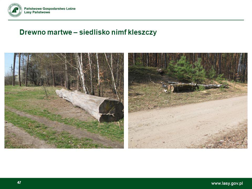 47 Drewno martwe – siedlisko nimf kleszczy