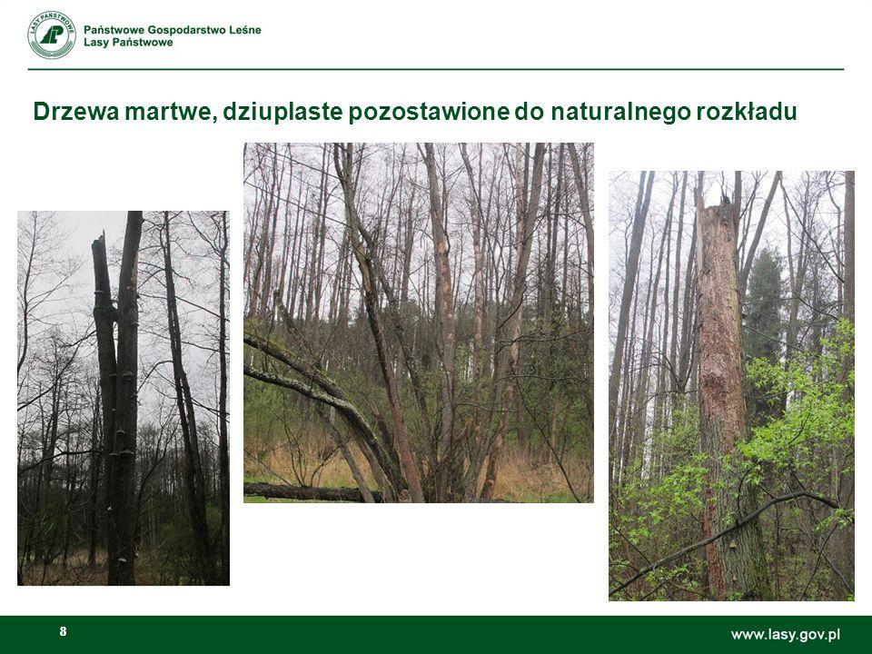 88 Drzewa martwe, dziuplaste pozostawione do naturalnego rozkładu