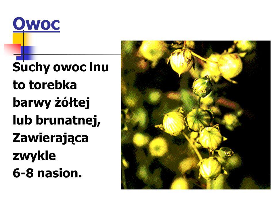 Owoc Suchy owoc lnu to torebka barwy żółtej lub brunatnej, Zawierająca zwykle 6-8 nasion.
