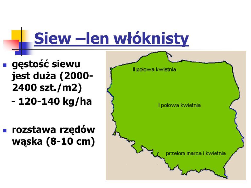 Siew –len włóknisty gęstość siewu jest duża (2000- 2400 szt./m2) - 120-140 kg/ha rozstawa rzędów wąska (8-10 cm)