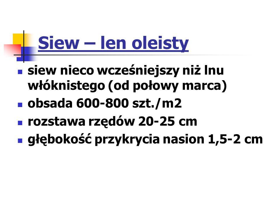 Siew – len oleisty siew nieco wcześniejszy niż lnu włóknistego (od połowy marca) obsada 600-800 szt./m2 rozstawa rzędów 20-25 cm głębokość przykrycia