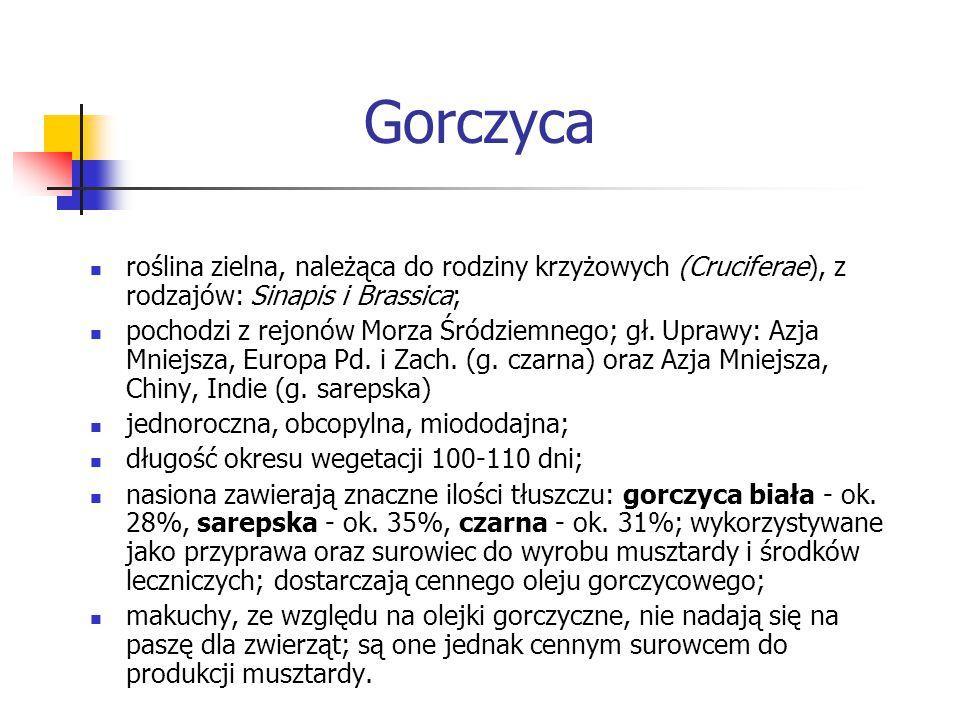 Gorczyca roślina zielna, należąca do rodziny krzyżowych (Cruciferae), z rodzajów: Sinapis i Brassica; pochodzi z rejonów Morza Śródziemnego; gł. Upraw