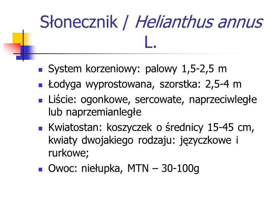Słonecznik / Helianthus annus L. System korzeniowy: palowy 1,5-2,5 m Łodyga wyprostowana, szorstka: 2,5-4 m Liście: ogonkowe, sercowate, naprzeciwległ