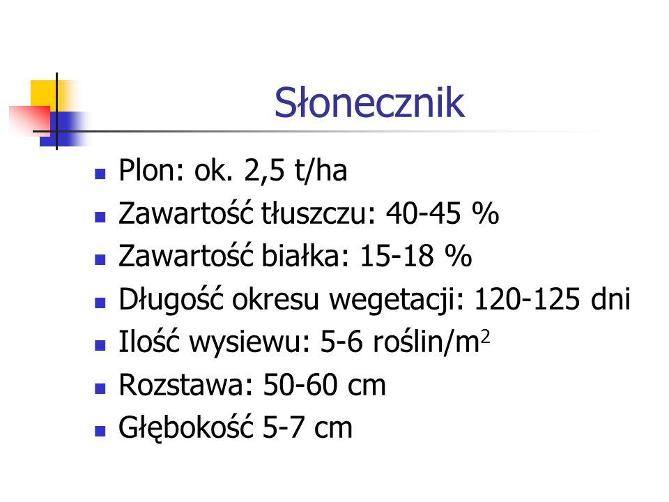 Słonecznik Plon: ok. 2,5 t/ha Zawartość tłuszczu: 40-45 % Zawartość białka: 15-18 % Długość okresu wegetacji: 120-125 dni Ilość wysiewu: 5-6 roślin/m