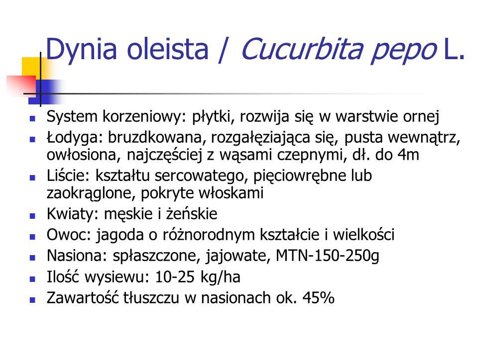 Dynia oleista / Cucurbita pepo L. System korzeniowy: płytki, rozwija się w warstwie ornej Łodyga: bruzdkowana, rozgałęziająca się, pusta wewnątrz, owł