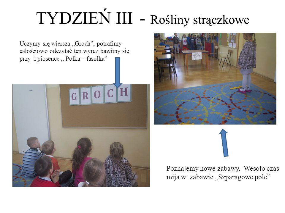 """TYDZIEŃ III - Rośliny strączkowe Uczymy się wiersza """"Groch"""", potrafimy całościowo odczytać ten wyraz bawimy się przy i piosence """" Polka – fasolka"""" Poz"""