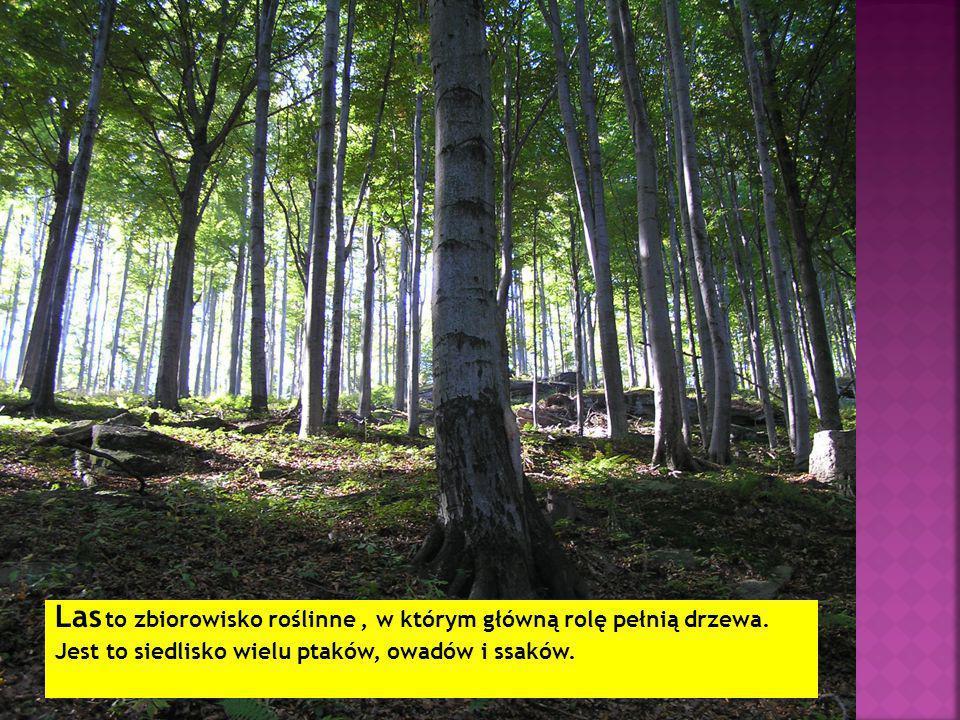 Las to zbiorowisko roślinne, w którym główną rolę pełnią drzewa.