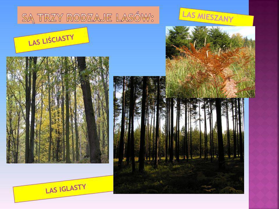 Las to zbiorowisko roślinne, w którym główną rolę pełnią drzewa. Jest to siedlisko wielu ptaków, owadów i ssaków.