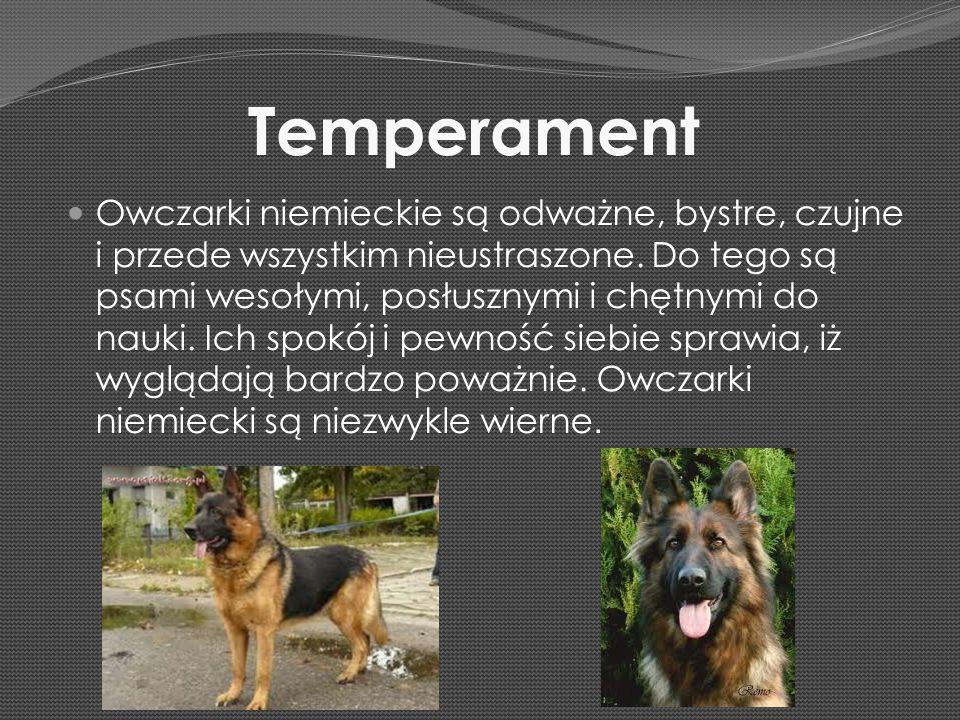 Temperament Owczarki niemieckie są odważne, bystre, czujne i przede wszystkim nieustraszone. Do tego są psami wesołymi, posłusznymi i chętnymi do nauk