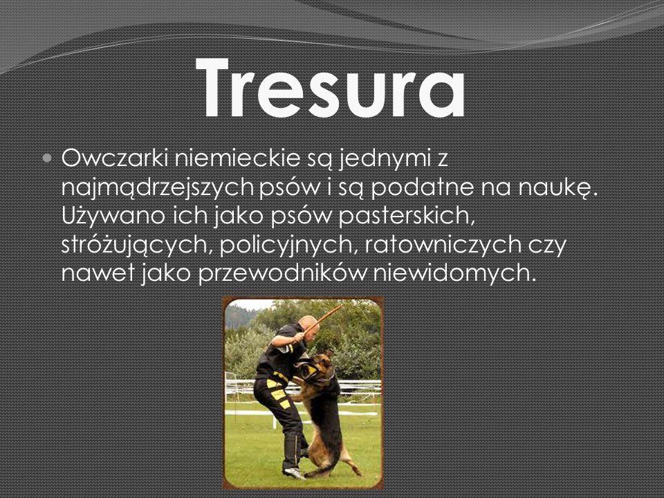 Tresura Owczarki niemieckie są jednymi z najmądrzejszych psów i są podatne na naukę. Używano ich jako psów pasterskich, stróżujących, policyjnych, rat