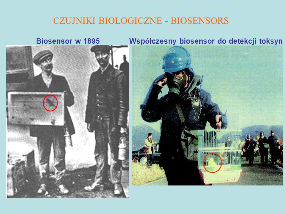 Biosensor w 1895 Współczesny biosensor do detekcji toksyn CZUJNIKI BIOLOGICZNE - BIOSENSORS