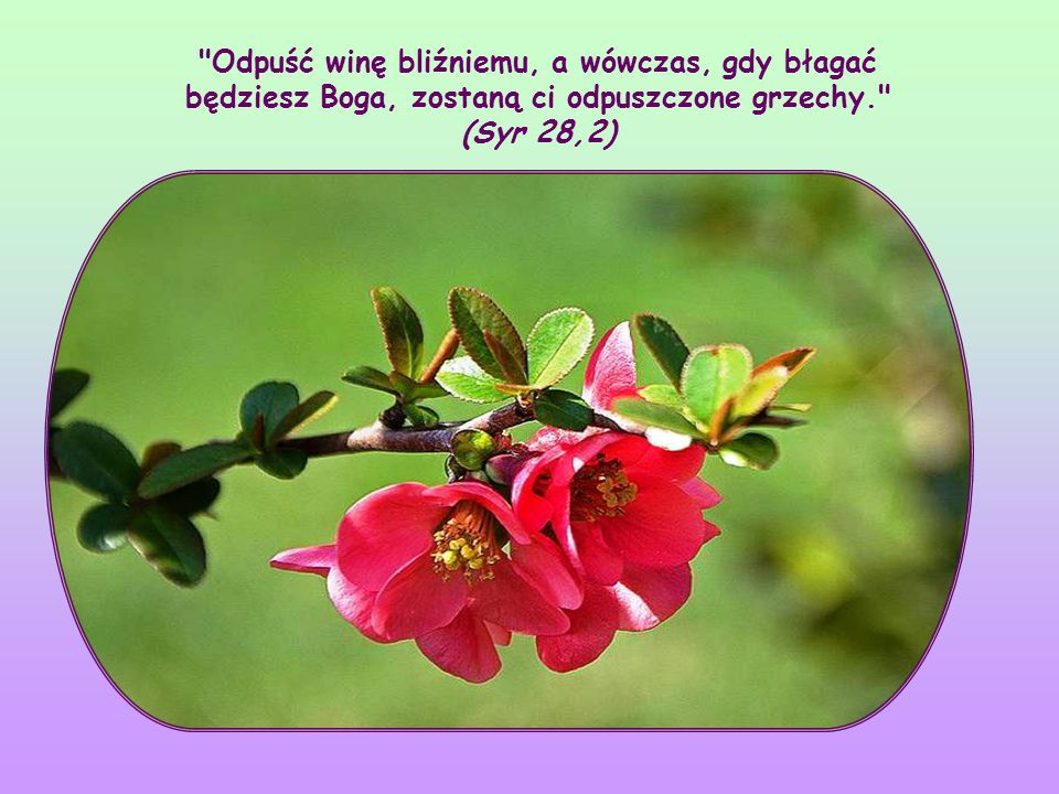 """""""Jeśli bowiem miłujecie tych, którzy was miłują, cóż za nagrodę mieć będziecie? – mówi Jezus – to umieją czynić wszyscy: """"Wy miłujcie waszych nieprzyjaciół (por."""