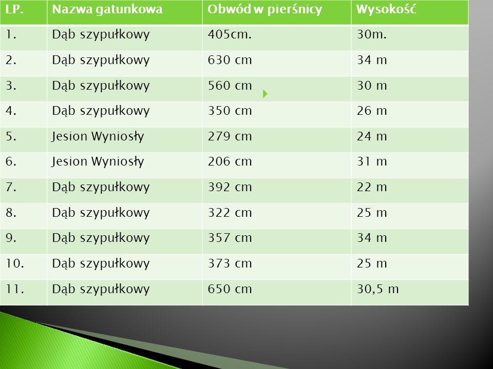 LP.Nazwa gatunkowaObwód w pierśnicyWysokość 1.Dąb szypułkowy405cm.30m. 2.Dąb szypułkowy630 cm34 m 3.Dąb szypułkowy560 cm30 m 4.Dąb szypułkowy350 cm26