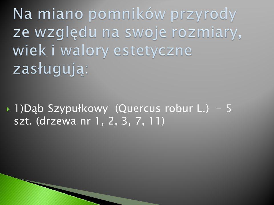  1)Dąb Szypułkowy (Quercus robur L.) - 5 szt. (drzewa nr 1, 2, 3, 7, 11)
