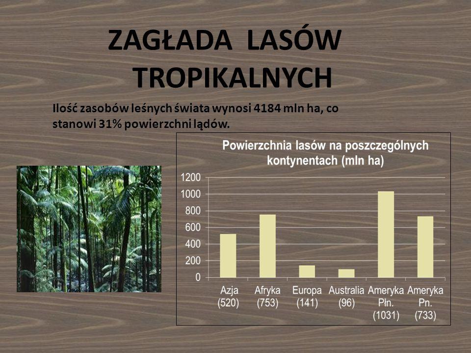 ZAGŁADA LASÓW TROPIKALNYCH Ilość zasobów leśnych świata wynosi 4184 mln ha, co stanowi 31% powierzchni lądów.