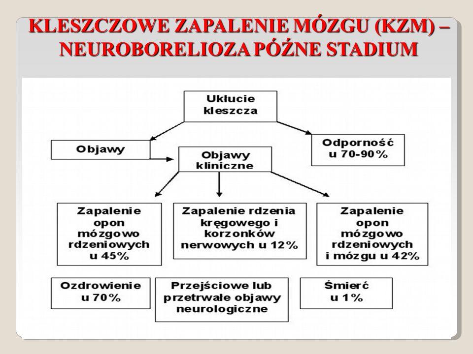KLESZCZOWE ZAPALENIE MÓZGU (KZM) – NEUROBORELIOZA PÓŹNE STADIUM