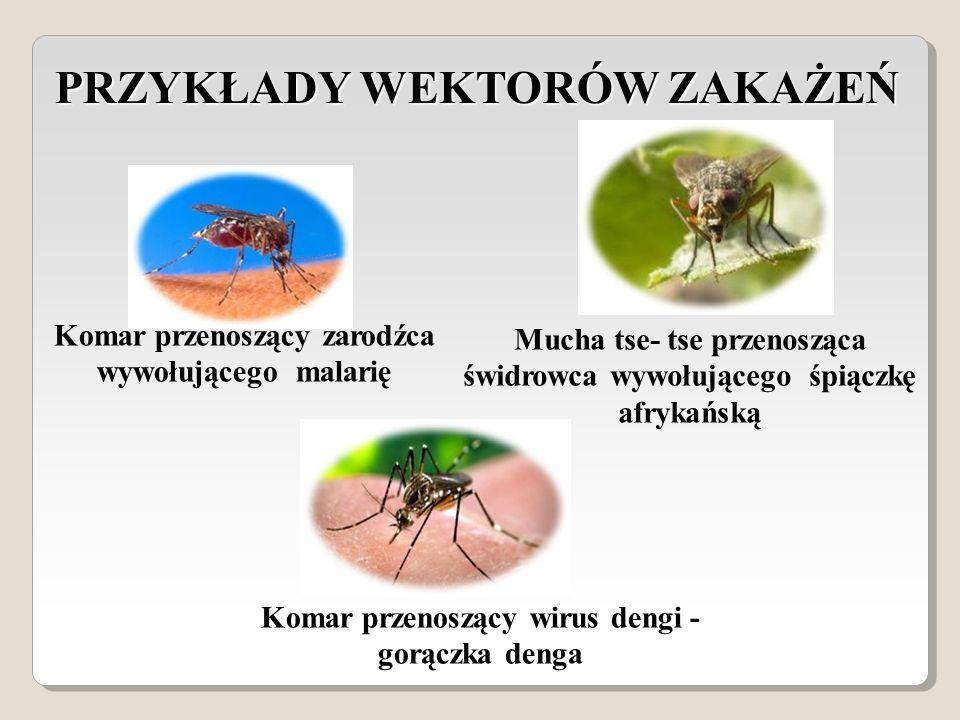 PRZYKŁADY WEKTORÓW ZAKAŻEŃ Mucha tse- tse przenosząca świdrowca wywołującego śpiączkę afrykańską Komar przenoszący zarodźca wywołującego malarię Komar przenoszący wirus dengi - gorączka denga