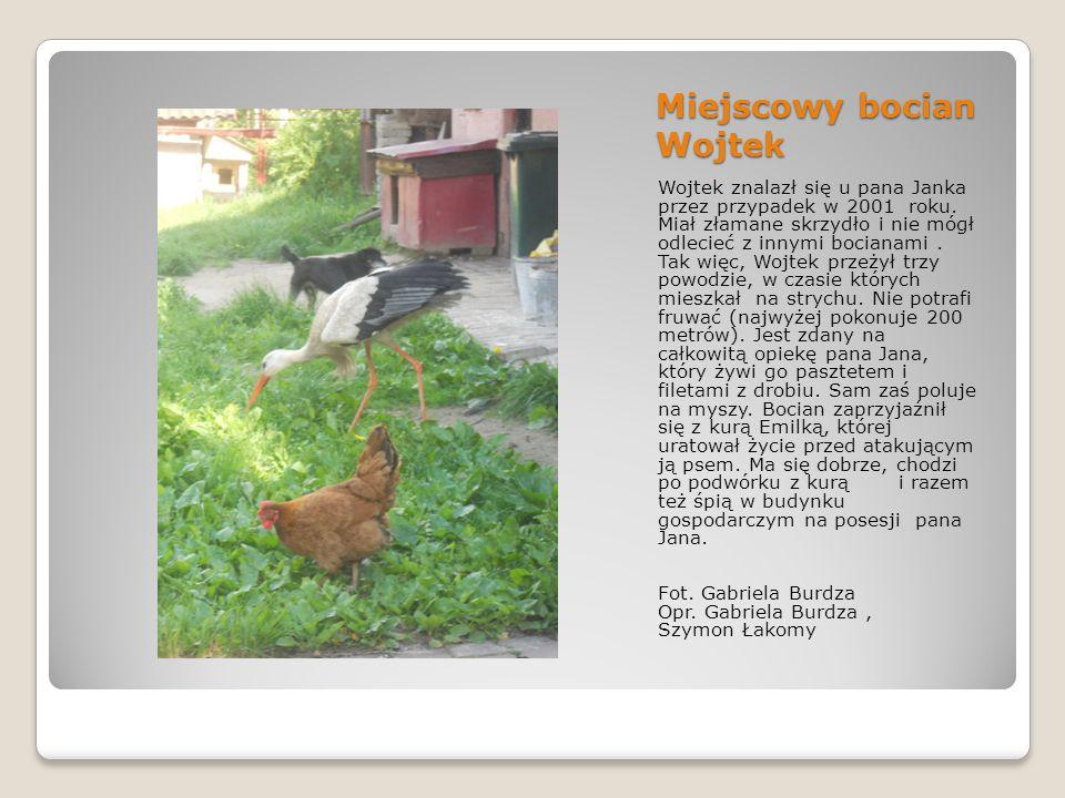 Miejscowy bocian Wojtek Wojtek znalazł się u pana Janka przez przypadek w 2001 roku.