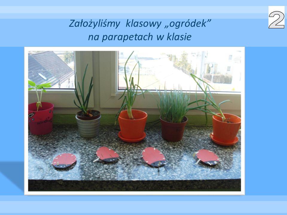 """Założyliśmy klasowy """"ogródek na parapetach w klasie"""