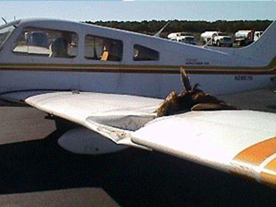 Ustawa Prawo lotnicze wnioskuje o dokonanie redukcyjnego odstrzału zwierzyny Zwrócić należy również uwagę na art.