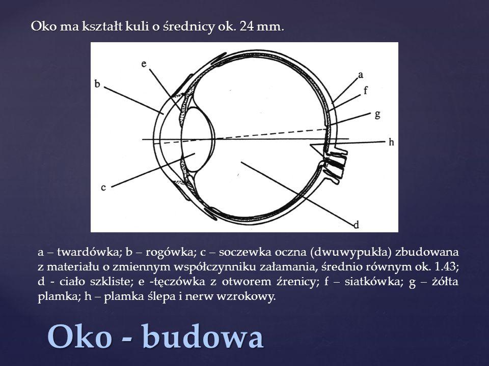 Oko - budowa Oko ma kształt kuli o średnicy ok.24 mm.