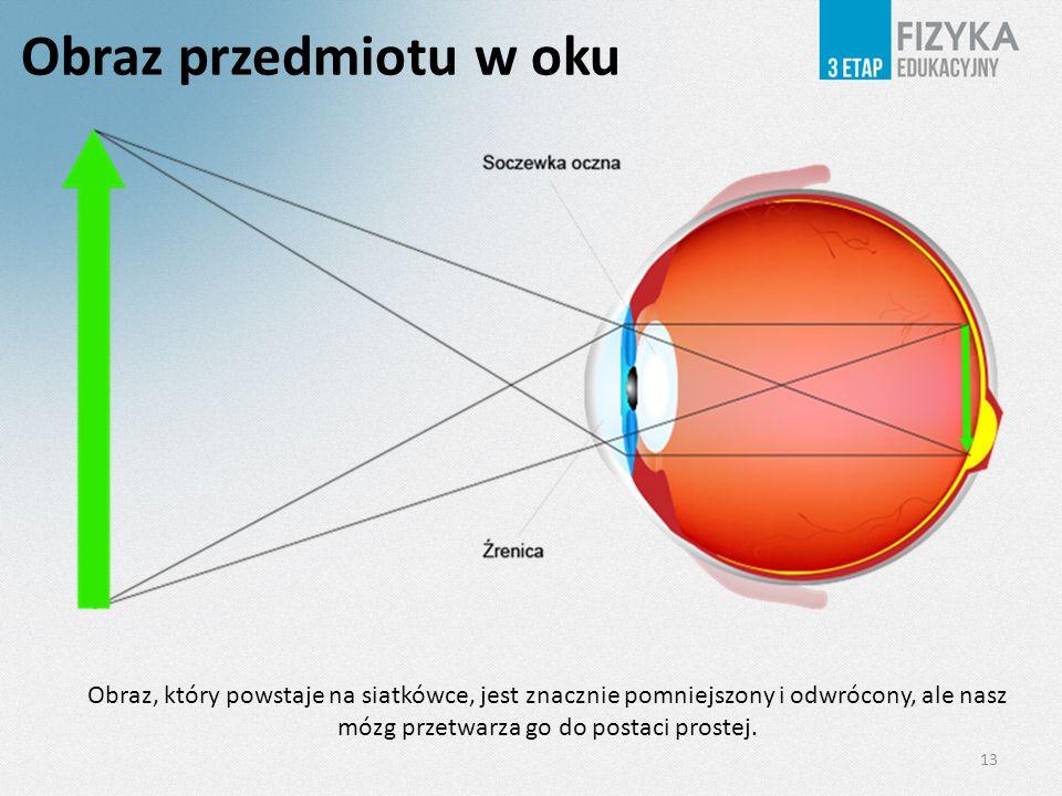 Obraz przedmiotu w oku 13 Obraz, który powstaje na siatkówce, jest znacznie pomniejszony i odwrócony, ale nasz mózg przetwarza go do postaci prostej.