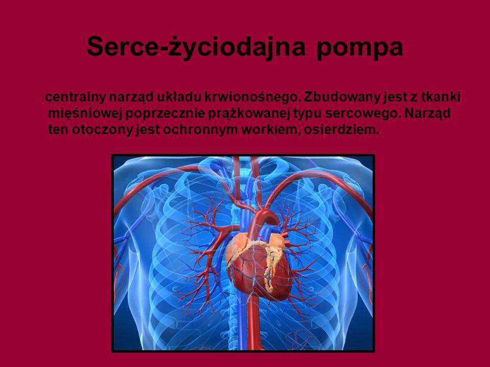 Serce-życiodajna pompa centralny narząd układu krwionośnego. Zbudowany jest z tkanki mięśniowej poprzecznie prążkowanej typu sercowego. Narząd ten oto