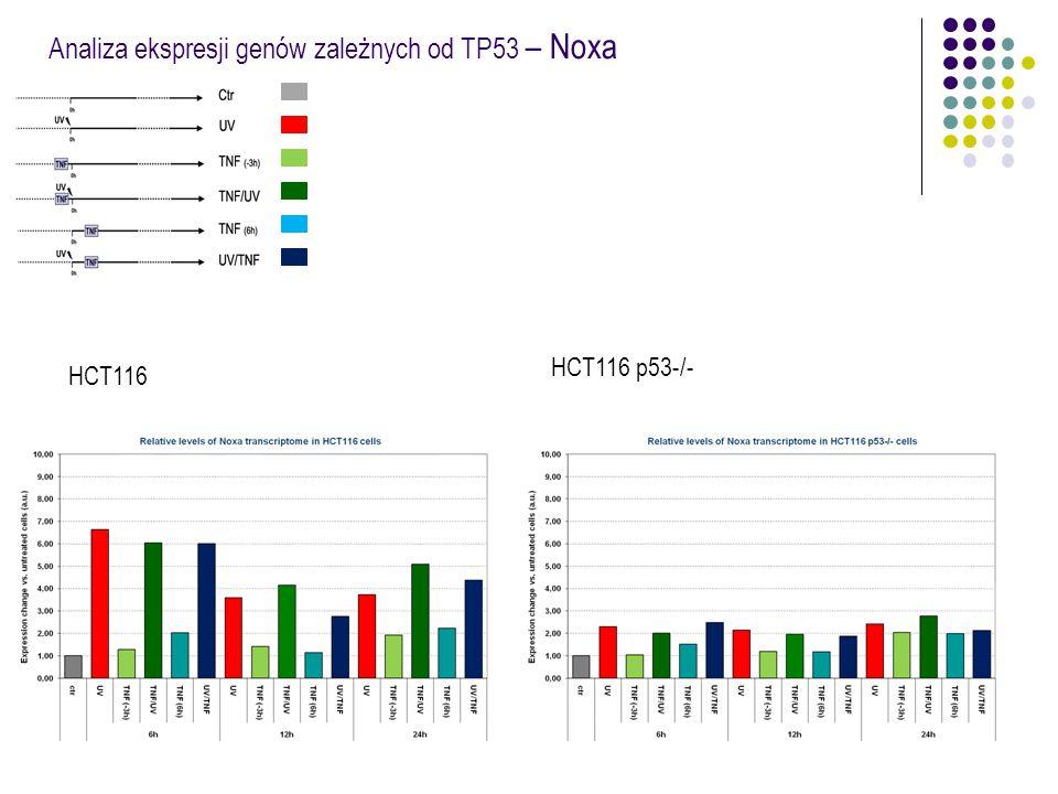 Analiza ekspresji genów zależnych od TP53 – Noxa HCT116 HCT116 p53-/-