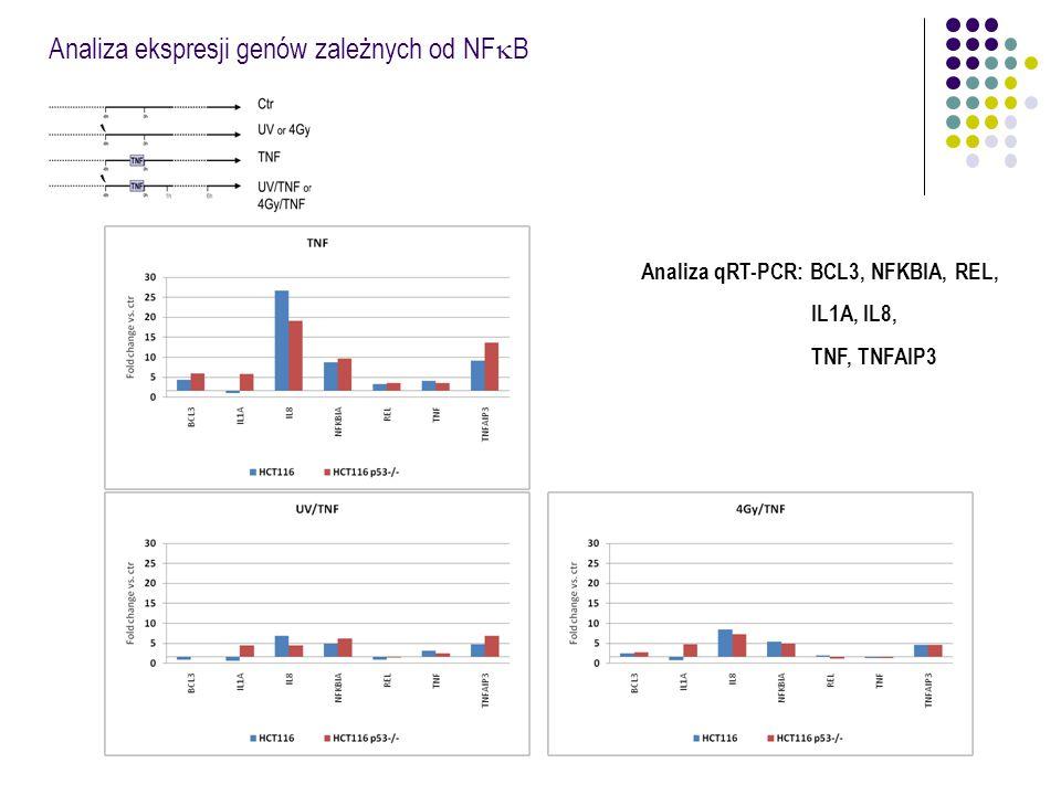 Analiza ekspresji genów zależnych od NF  B Analiza qRT-PCR: BCL3, NFKBIA, REL, IL1A, IL8, TNF, TNFAIP3