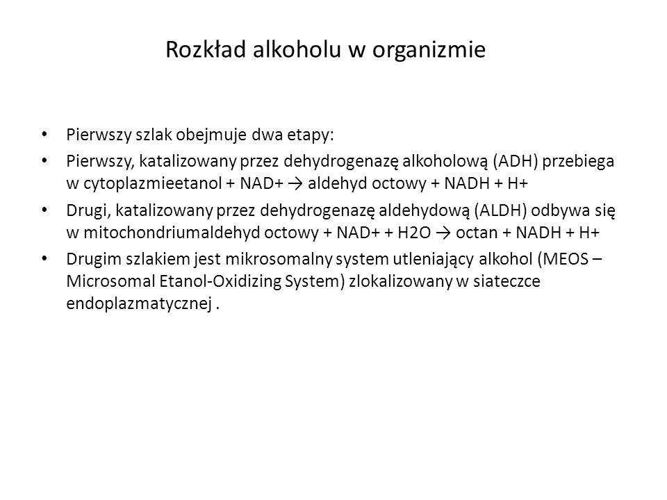 Pierwszy szlak obejmuje dwa etapy: Pierwszy, katalizowany przez dehydrogenazę alkoholową (ADH) przebiega w cytoplazmieetanol + NAD+ → aldehyd octowy +