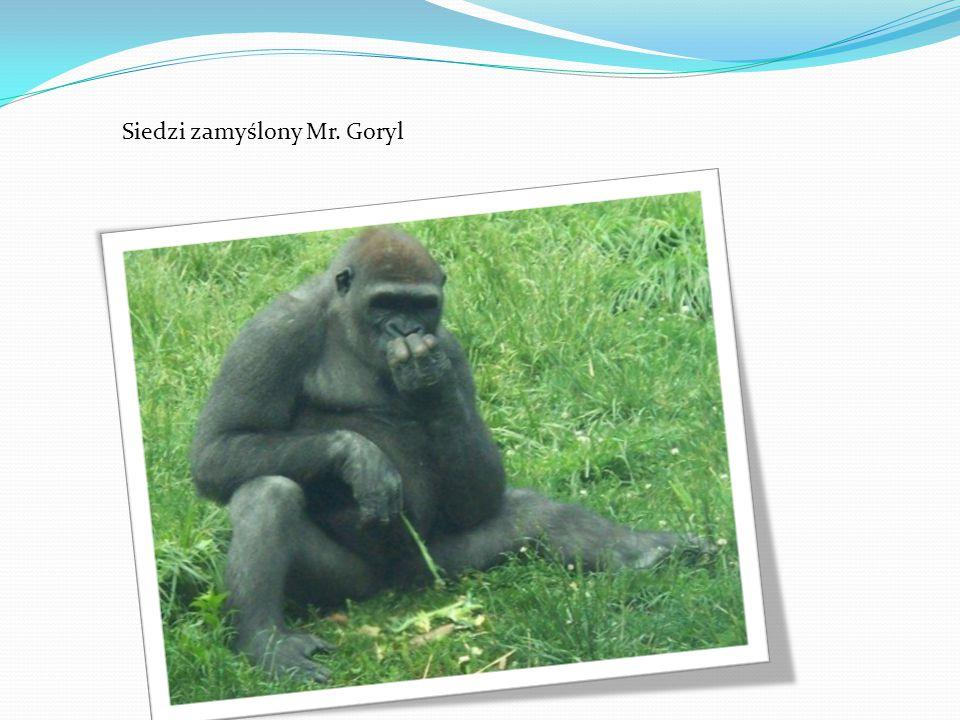 Siedzi zamyślony Mr. Goryl