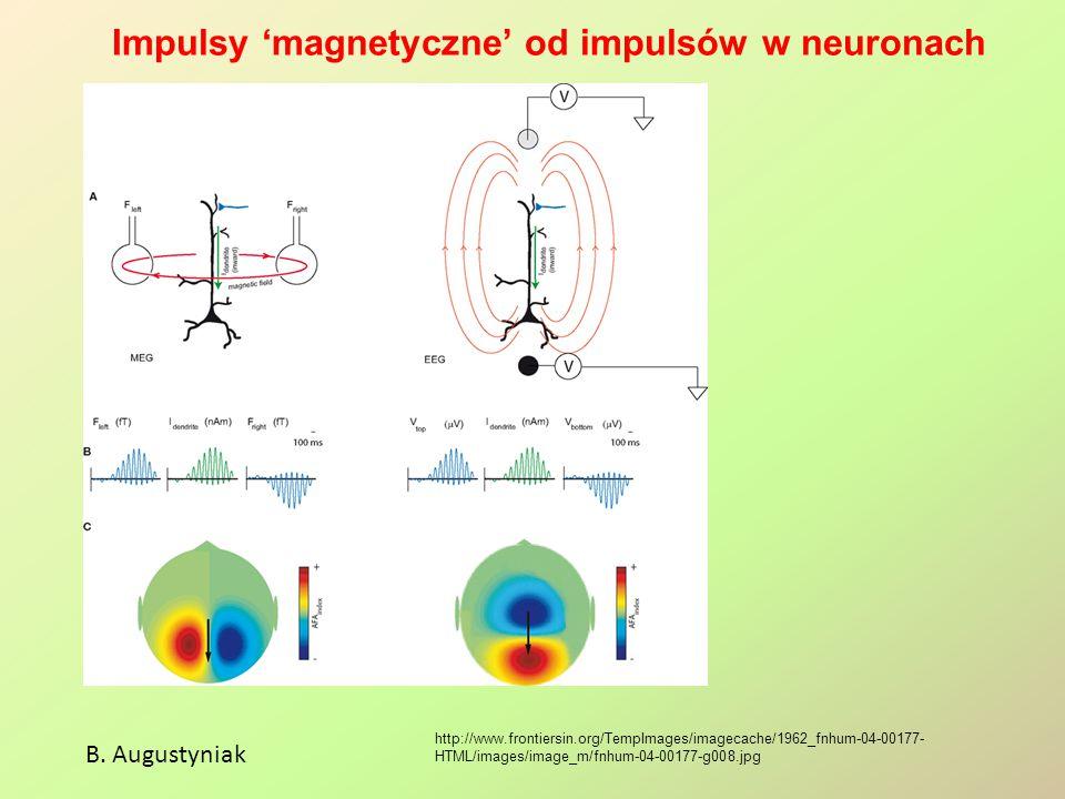 Impulsy 'magnetyczne' od impulsów w neuronach B. Augustyniak http://www.frontiersin.org/TempImages/imagecache/1962_fnhum-04-00177- HTML/images/image_m