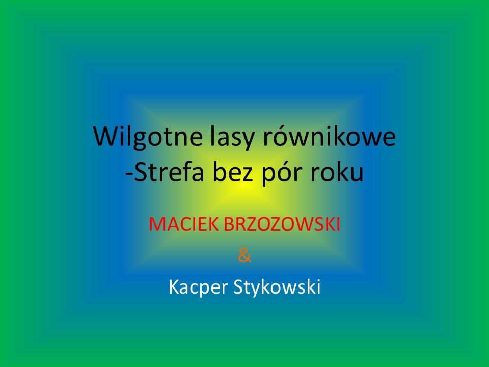 Wilgotne lasy równikowe -Strefa bez pór roku MACIEK BRZOZOWSKI & Kacper Stykowski