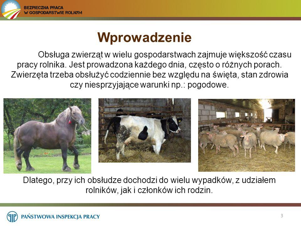 4 Według statystyk, prowadzonych przez KRUS, średnio każdego roku, około 12% wszystkich wypadków, za które wypłacono odszkodowania wiąże się z obsługą zwierząt gospodarskich .