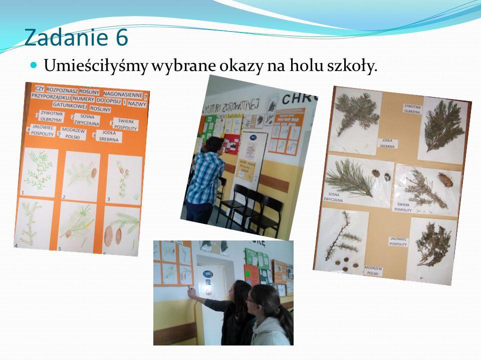 Zadanie 6 Umieściłyśmy wybrane okazy na holu szkoły.