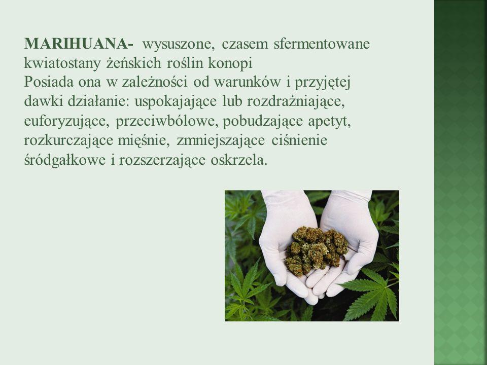 MARIHUANA- wysuszone, czasem sfermentowane kwiatostany żeńskich roślin konopi Posiada ona w zależności od warunków i przyjętej dawki działanie: uspoka