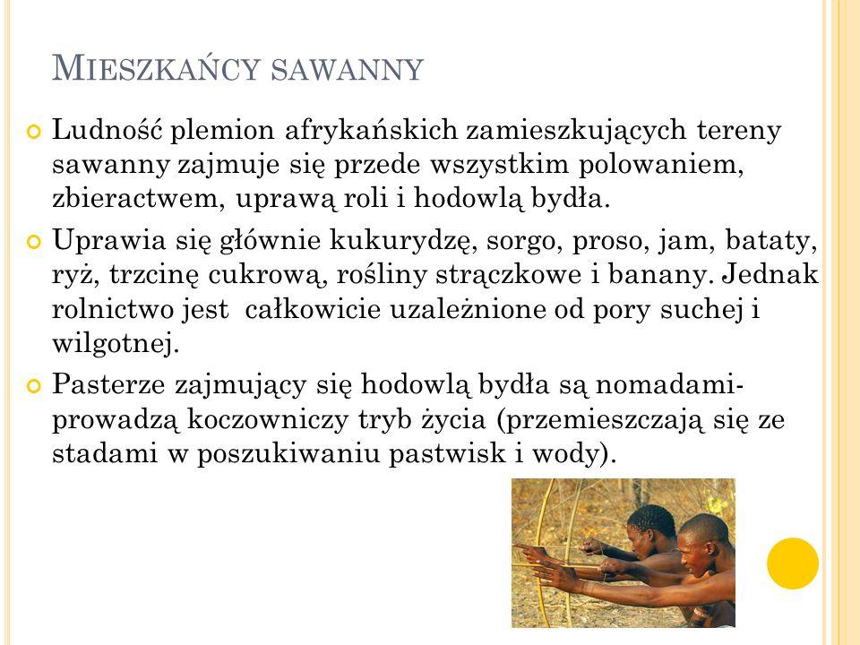 M IESZKAŃCY SAWANNY Ludność plemion afrykańskich zamieszkujących tereny sawanny zajmuje się przede wszystkim polowaniem, zbieractwem, uprawą roli i ho