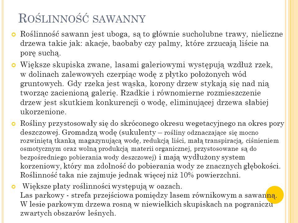 R OŚLINNOŚĆ SAWANNY Roślinność sawann jest uboga, są to głównie sucholubne trawy, nieliczne drzewa takie jak: akacje, baobaby czy palmy, które zrzucaj