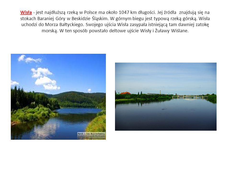 Wisła - jest najdłuższą rzeką w Polsce ma około 1047 km długości. Jej źródła znajdują się na stokach Baraniej Góry w Beskidzie Śląskim. W górnym biegu