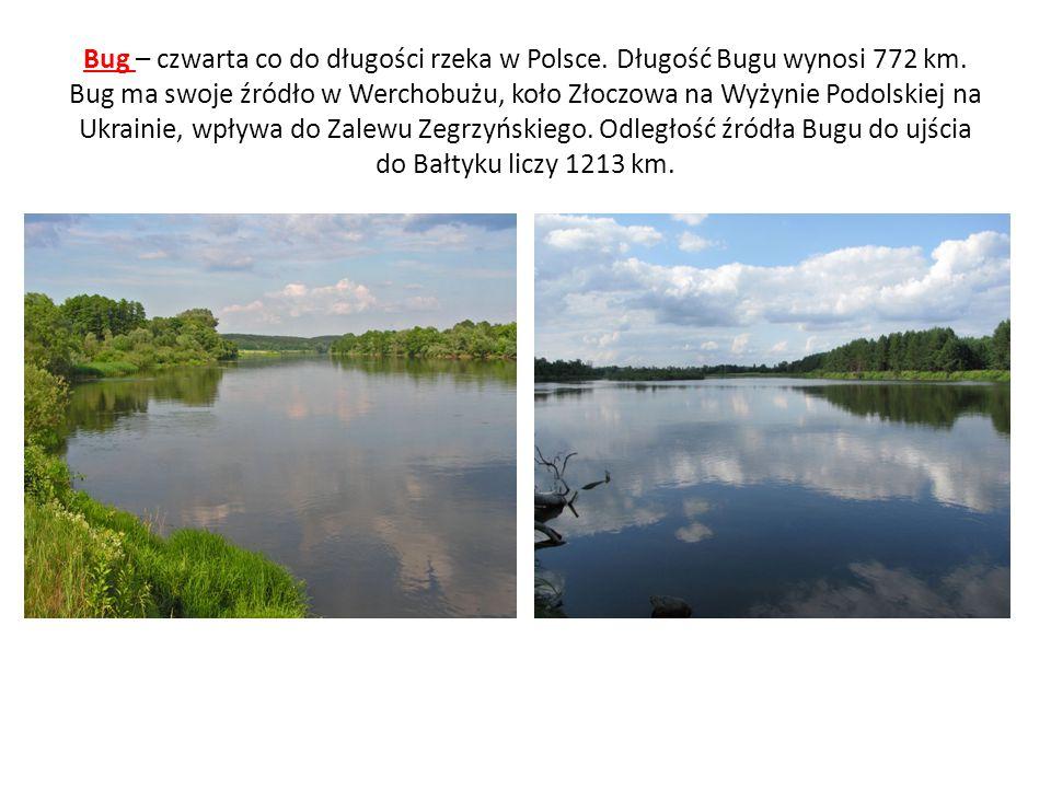 Bug – czwarta co do długości rzeka w Polsce. Długość Bugu wynosi 772 km. Bug ma swoje źródło w Werchobużu, koło Złoczowa na Wyżynie Podolskiej na Ukra